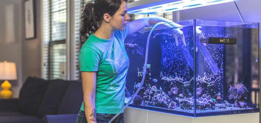la forma correcta de realizar un cambio de agua en un acuario marino