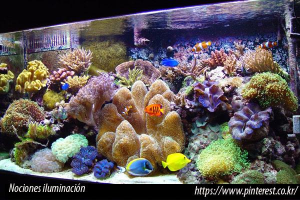 La luz como fuente energía para los corales
