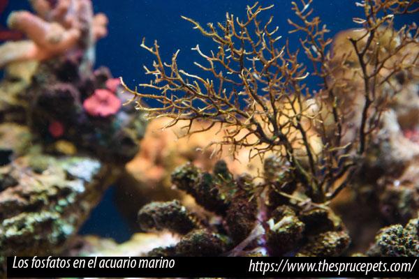 El por qué de los fosfatos en el acuario marino