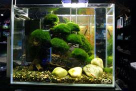 El filtro en acuario con abono por CO2