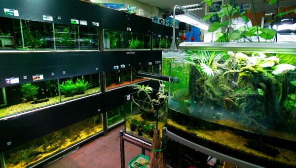 El cultivo comercial de las plantas de acuario