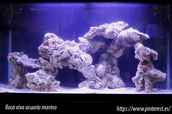 La roca viva para el acuario marino