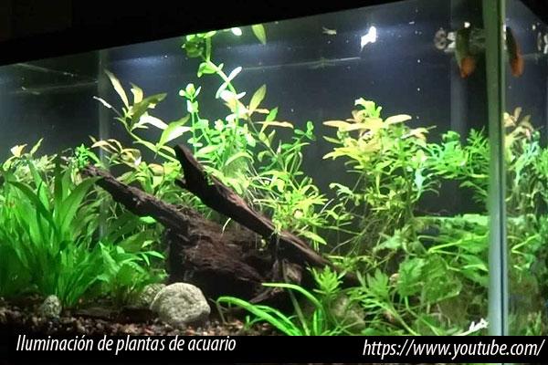 Iluminación correcta para las plantas de acuario