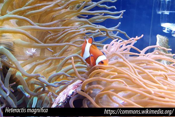 Proliferación de algas acuario marino